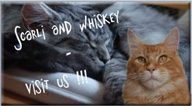 Scarli und Whiskey - Stefanie Liebold